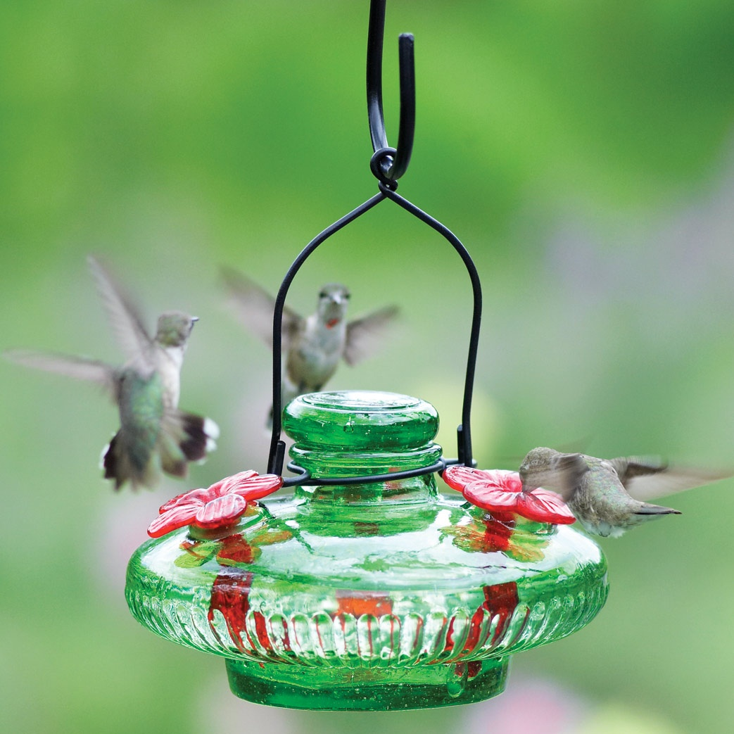 for asp stake glass pixie feeder hummingbird yard sale envy feeders hanging