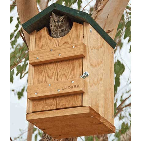 screech owl bird house - yard envy