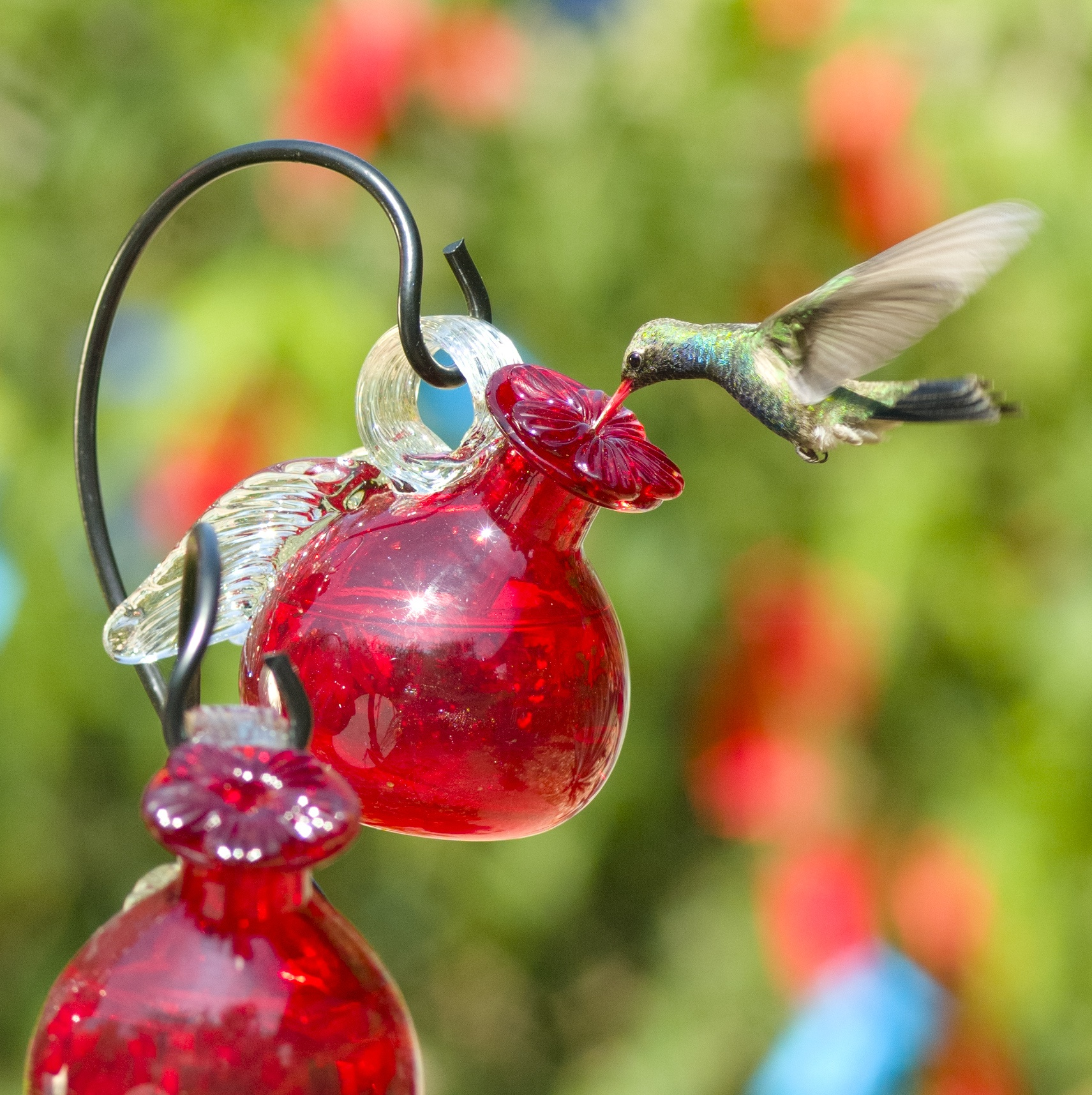hanging pixie hummingbird feeder yard sale glass stake envy feeders for asp