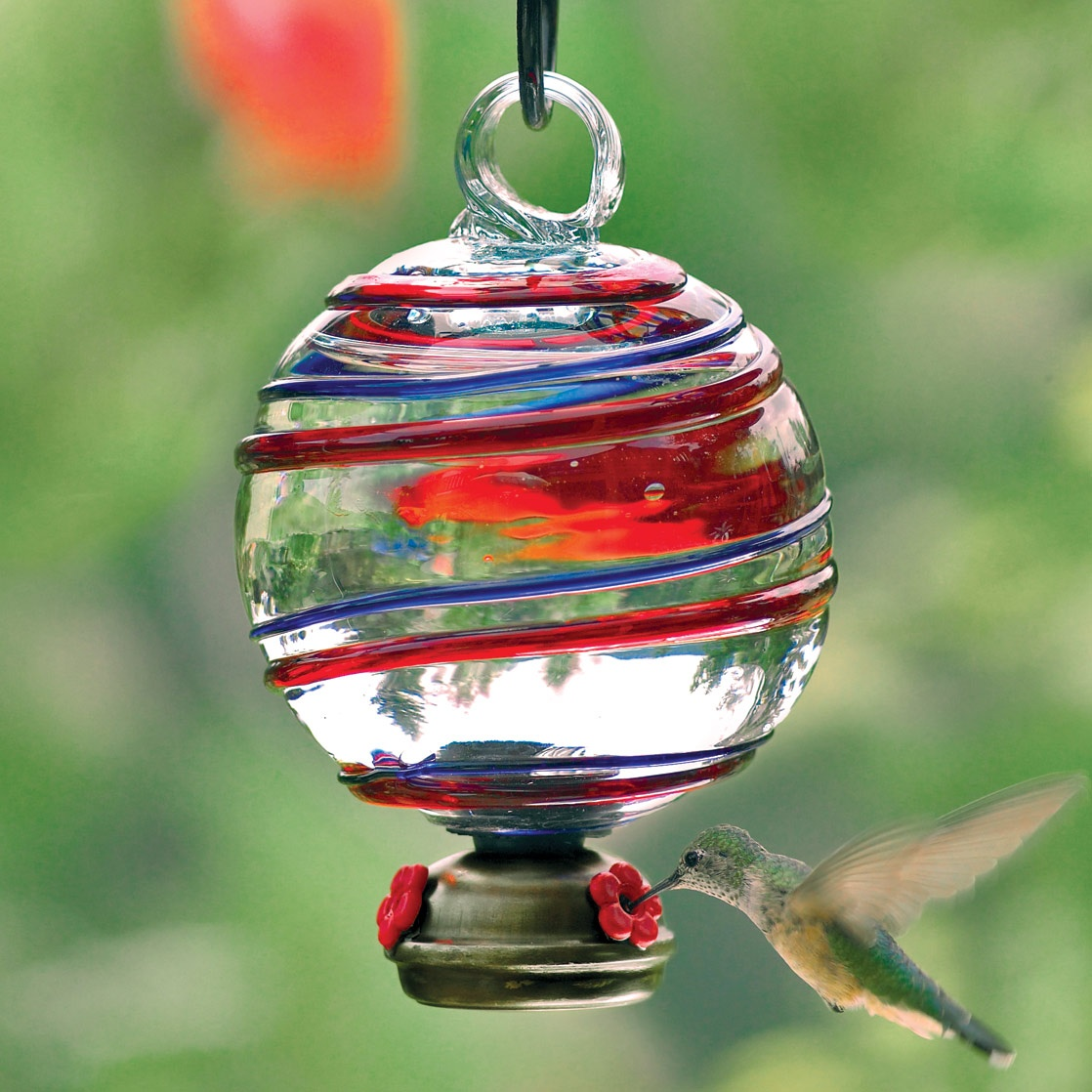 perkins hummingbird droplets at humingbird jackson p duo feeder