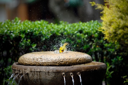 Attract birds with water
