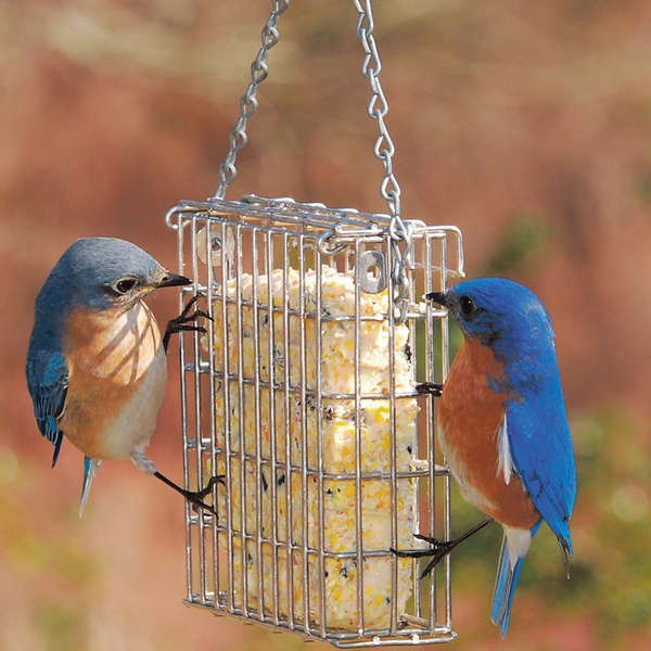 Suet feeders yard envy for How to make suet balls for bird feeders