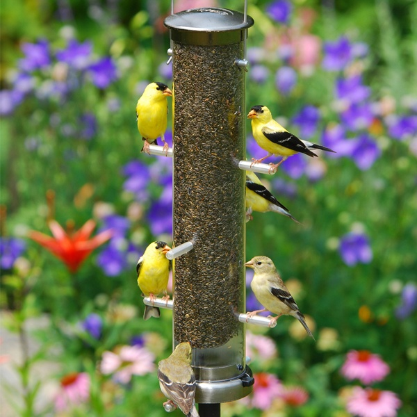 Tube Bird Feeders Yard Envy